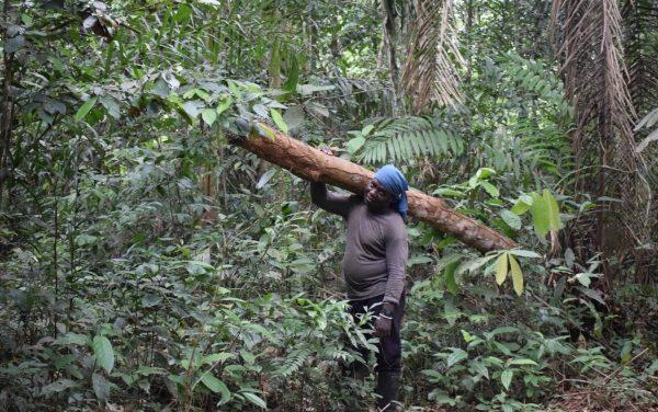 Informe técnico. Dilemas territoriales de los campesinos en PNN
