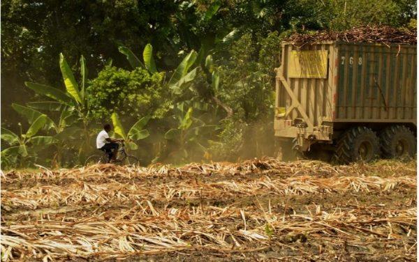Imperativos verdes y subjetividades ambientales campesinas